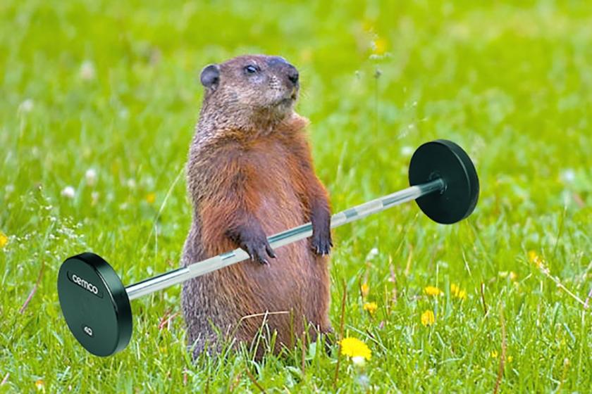 Image result for Spring workout
