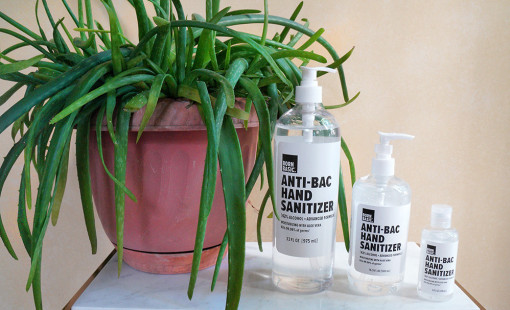 BornBasic hand sanitizer in different sizes on a tabletop next to an aloe plant.